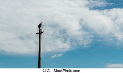 Stork Sitting in a Nest on a Pillar High Voltage Power Lines in Village. Time Lapse