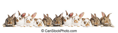 group of rabbits in a row - group of young light brown and...