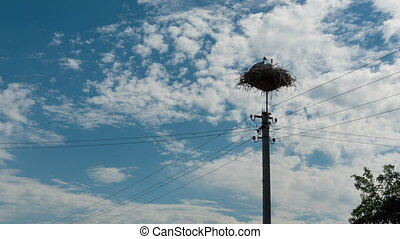 Storks Sitting in a Nest on a Pillar High Voltage Power Lines. Time Lapse
