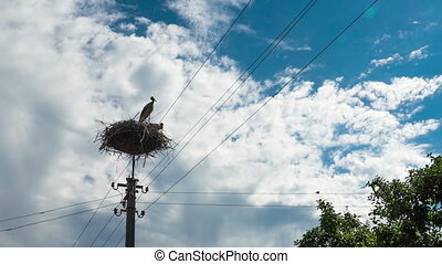 Storks in a Nest on a Pillar in Village. Time Lapse