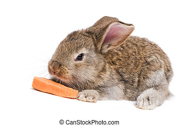 one young baby light brown rabbits with long ears isolated on white