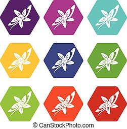 Vanilla sticks with a flower icon set color hexahedron