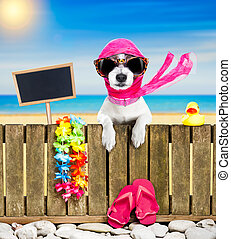 dog on beach on summer vacation holidays - terrier dog...