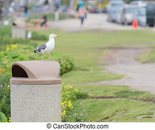 Seagull Perched on Trash Can