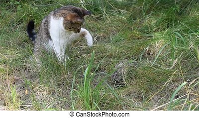 Cat explores a hedgehog outdoors on background of green...