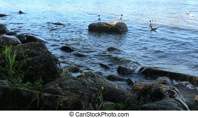Lakeshore summer stones water birds - Lakeshore summer...