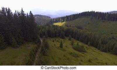 Flight in the mountains over the summer Carpathian forest.