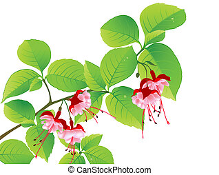 green flowering branch of tropical tree