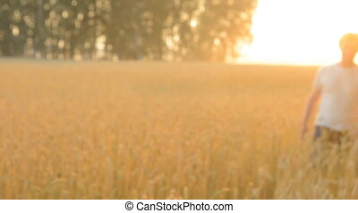 Go farmer on the wheat field. Adult man against a ripe crop...