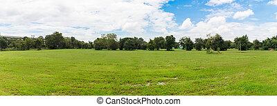ciel bleu, clair, arrière-plan vert, herbe