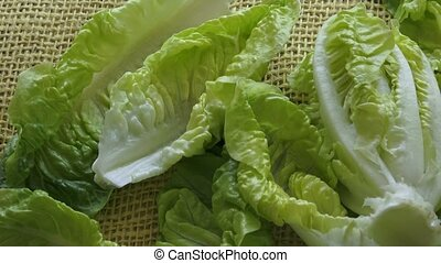 Fresh green lettuce isolated on yellow background