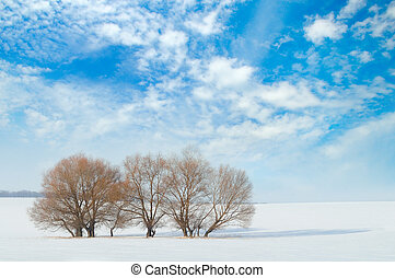 field and trees in the snow and sky - snow-covered field and...