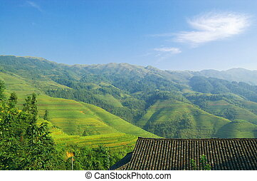 Chinese green rice field - Green rice field in Guangxi...