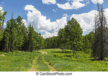 Four Wheel Drive Trail in Utah - Back country four wheel...