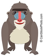 Mandrill baboon on white background illustration