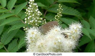 butterfly in flower bush