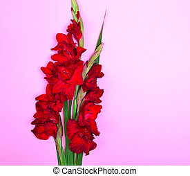 bouquet of red gladiolus