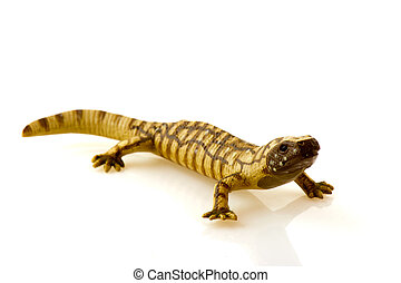 reptile - Toy reptile animal isolated over white background