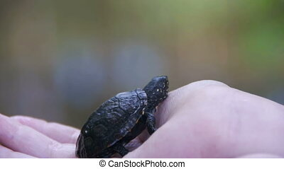 Boy Holding a Small Turtle in the Palm of your Hand that Creeps. Slow Motion