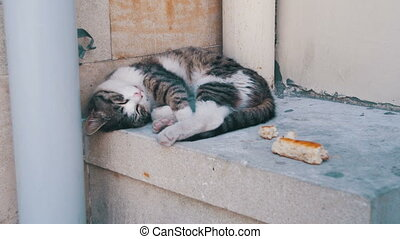 Homeless Cat Sleeps on the Street in the Summer. Black and...