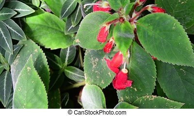 Closeup of tropical flowers. Beautiful tropical background. Red and green background.