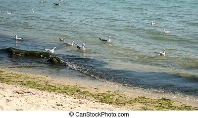 sea gulls float on waves