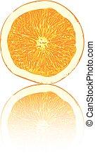 orange fruit vector illustration