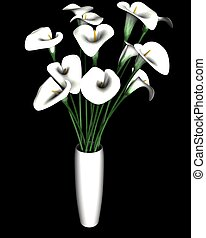 White Calla Lily Flower Isolated On Black