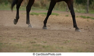 Horseback riding lessons - hooves of horse on hippodrome,...
