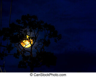 moon light and silhouette tree in the night, Elements of...