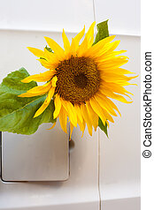 bio-fuel concept - Sunflower growing out of a vehicle's gas...
