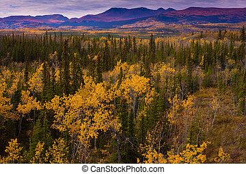 Yukon, oro, -, otoño, Yukon, territorio,...