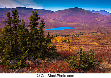 Alpine tundra - Fall-colored alpine tundra, Yukon Territory,...