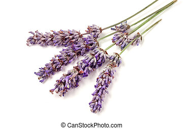 Twig of lavender isolated on a white background