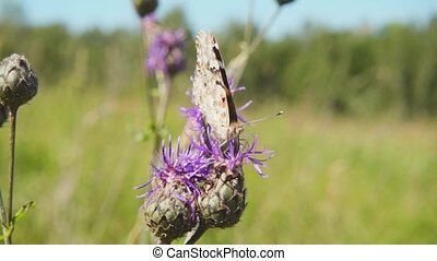 Butterfly collecting nectar from a flower and then takes...