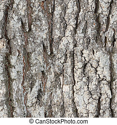 Seamless texture - bark - The seamless texture surface of...