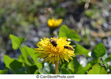 Pollination Team - Una abeja, una avispa y una mosca...