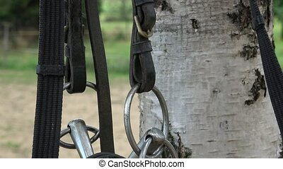 Horse bit and bridle hanging outside a horses stable. Horse...