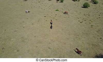 Wild horses from the air