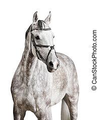 白色的馬, 被隔离