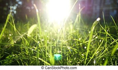 Green nature summer sun