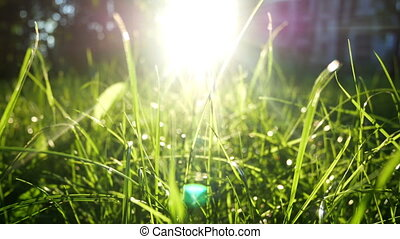 Green nature summer sun - Shot of a green scenic in summer,...