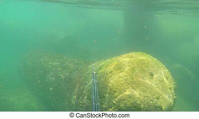 Underwater hunter caught a harpoon fish. On rocks. -...