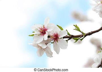 primavera, bem-vindo