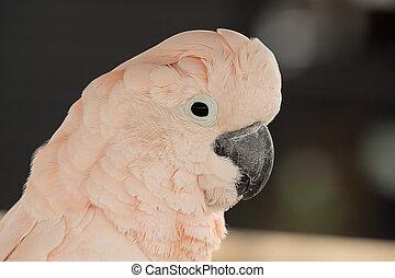 parrot 7070 - pink parrot portrait
