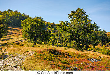 road through beech forest on a hillside - country road...