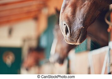 Nose of the horse in the contemporary stable - selective...