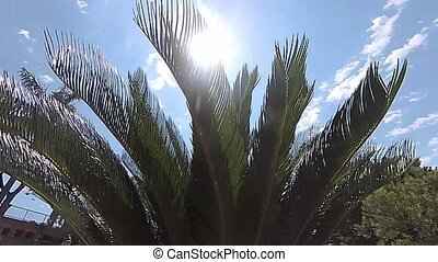 Sunshine coming through big palm leaves in a sunny day in...