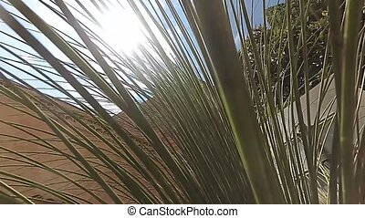 Sunshine coming through palm leaves - Slow motion of...