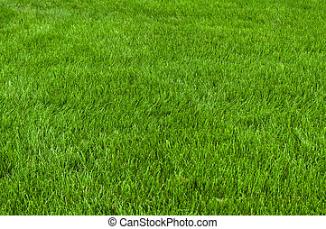 Neatly cut grass. Full frame short with wide depth of field.